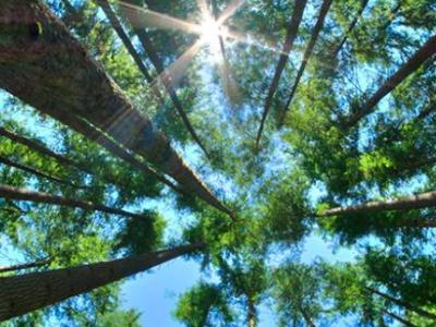 [ CRA-CE ] 50 anos, 50 árvores